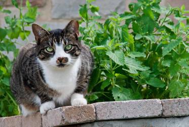 Catnip Gardener by cfry