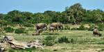 Yala National Park by CitizenFresh