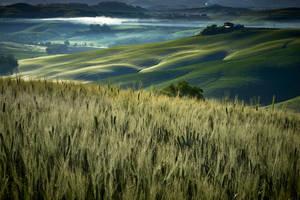 Misty Morning in Tuscany 2 by CitizenFresh
