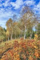 Autumn Impressions by CitizenFresh