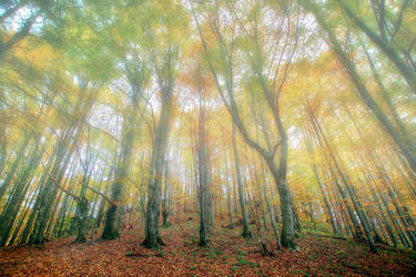 Foggy Forest by CitizenFresh