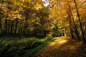 Autumn light and shadows 4 by CitizenFresh