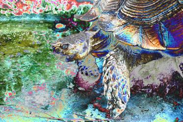 Trippy turtle by delha4