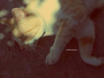 In peace by SolDurmiente