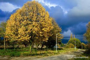Treestreet by joerimages