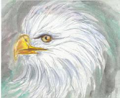 eagle by chuquin