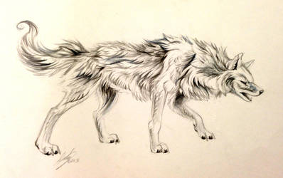 Wolf Sketch by Lucky978