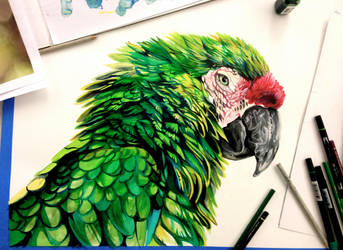 Parrot Drawing by Lucky978
