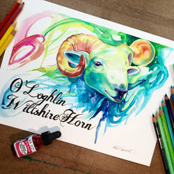 Wiltshire Ram by Lucky978