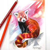 Red Panda by Lucky978