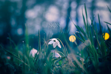 Through Spring To Inifinity by pro-non