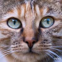 La chatte by rdalpes