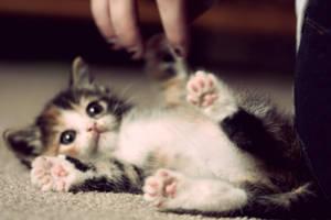 Cute Ass Kitten by amyrenee121
