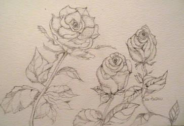 rosa 37 by GeaAusten