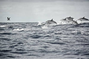 dolphins by CaTiT