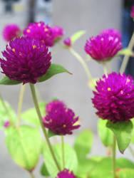 Purple by ayanamifaerudo