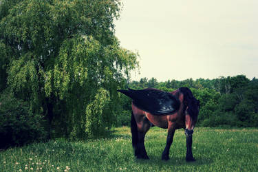 The Guardian Of the Willow (edited) by Boggeyboo