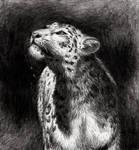 CP: Snow leopard for sheorun by MusicAndArtItsMyLife