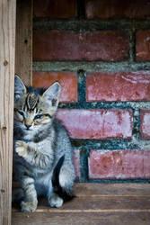 Timid Kitty by Arai-Foto