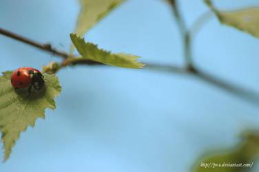 ladybird by Po-e