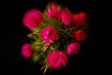Bloomin Beauty - Zoom Burst by Phill-J