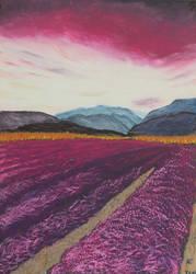 Lavenderfield by MissValeriana
