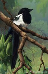 Magpie by zetallis