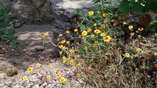 Wild Flowers by YoLoL