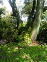 Three Trees by YoLoL