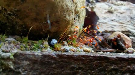Tiny Wild Flowers by YoLoL