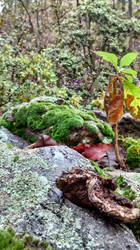 Fungus and Moss by YoLoL