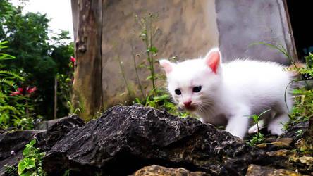 My Lovely Cat by Irkamala