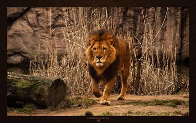 Lion by -nightm4r3-