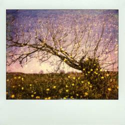 Hippie Tree by DenisOlivier
