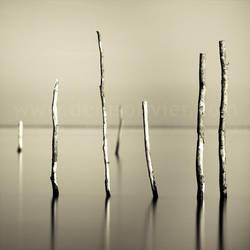 Quiet Poles Study by DenisOlivier