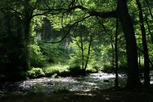 Woody Riverbank by Ellessys-Stock