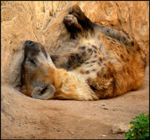 Sleepy Spots by Leonca