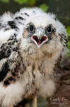 Baby Peregrine Falcon by lost-nomad07