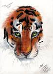 eye of the tiger gift by zubiatesuntamnedart