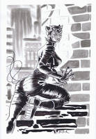 Catwoman by DaveBullock