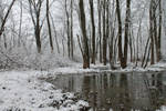 Winter Swamp 1 by wax-wing