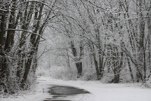 Winter Road 2 by wax-wing