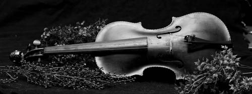 Violin by wax-wing