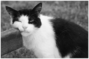 A cat by Moitessier