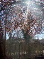 Cherry Tree With An Old Shed By Mizuki Okami Misheru On Deviantart