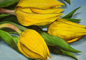 Yellow Tulips by B-Keks