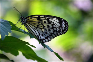 Stainglass Wings by Drake-UK