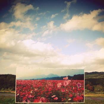 flowers gone :::: by aopan