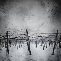 vinyards 3 ::: by aopan