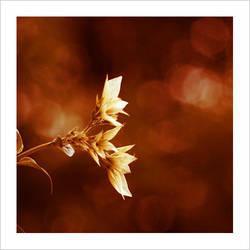 untitled flower by belajarmotret